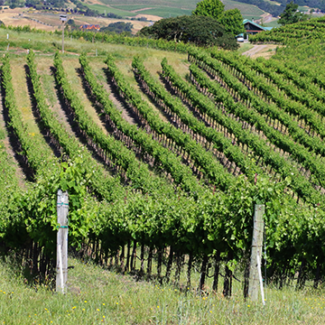 Front_Page_Images_Vineyard_02