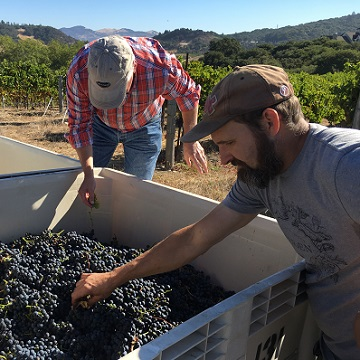 Dale and winemaker Randy Czech sorting in the vineyard